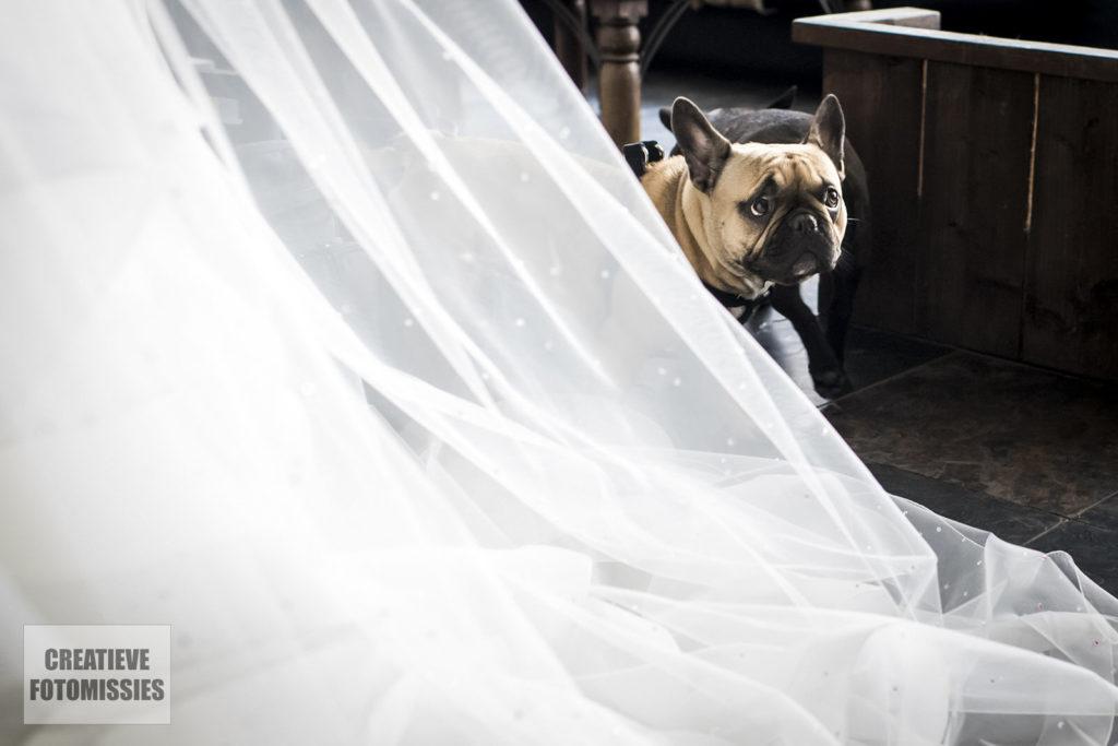 hond bruiloft